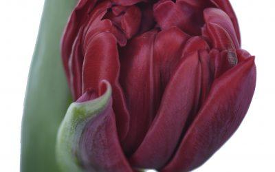 Prijzen voorjaarsbloeiers bekend